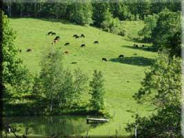 LWF_pasture